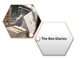 bee dairies logo