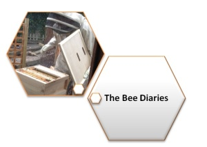 bee dairies logo