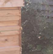 hive4